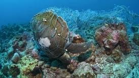 Científicos piden a diputados archivar proyecto que resucitaría pesca de arrastre