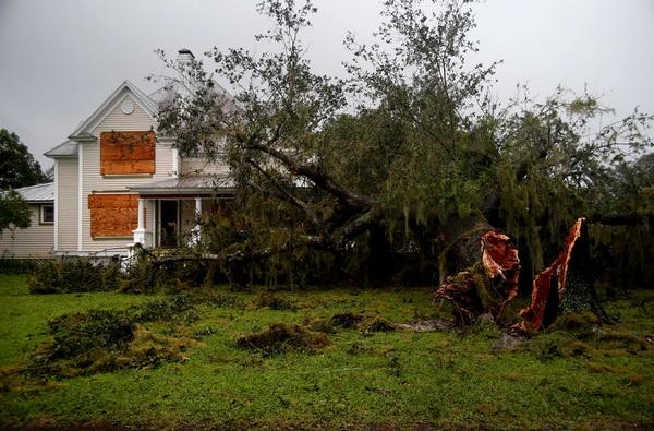 Árboles caídos son parte del efecto de Irma en Florida.