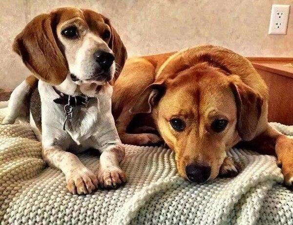 Los investigadores compararon los genomas de 71 restos de perros hallados en Norteamérica y Siberia. Foto Archivo LN con fines ilustrativos