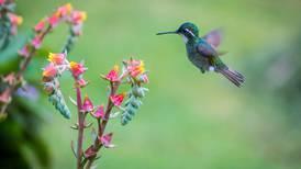 Avistamiento de aves, un 'hobby' económico y de fácil acceso