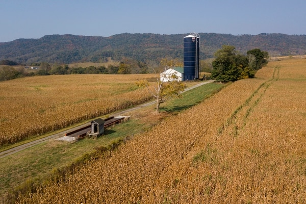 El acuerdo comercial parcial entre Estados Unidos y China contempla el aumento de la demanda de productos agrícolas estadounidenses. En la imagen, un sembradío de maíz en Virginia. Foto: AP.