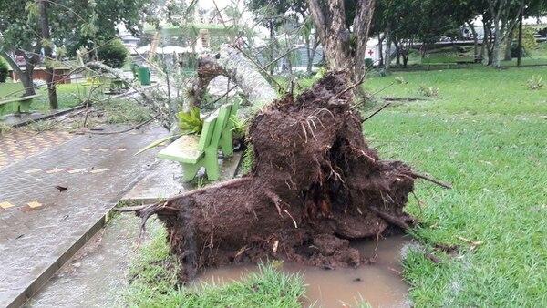 Uno de los árboles que sucumbió ante los fuertes vientos en Puriscal.