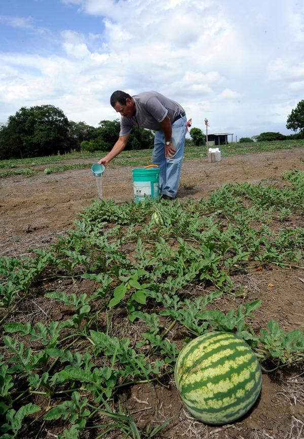 La sequía en la región Chorotega y el exceso de lluvias en la zona norte y el Caribe provocan que la producción agrícola costarricense presente ocho meses de comportamiento negativo.   GRACIELA SOLÍS