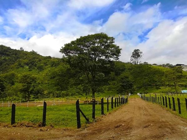 Hacienda Orosi cuenta con senderos en los que se pueden realizar caminatas de 60 a 90 minutos.