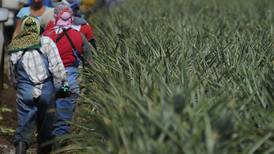 Exportaciones de piña se recuperan este 2021 a los niveles prepandemia
