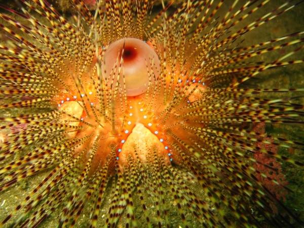 Imagen del Instituto de Oceanología de Costa Rica que ha documentado las especies que habitan alrededor de Isla Plata.
