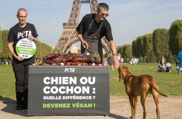 People for the Ethical Treatment of Animals (PETA) activists stand next to a grill with an effigy of a 'grilled dog' with a sign that reads, 'Dog or Pig what is the difference- become vegan' during a campaign against animal cruelty and in support for Veganism at the Champ-de-Mars in Paris on August 23, 2019. (Photo by Geoffroy VAN DER HASSELT / AFP)