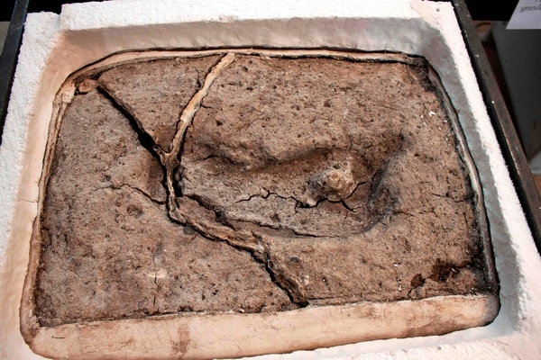 La paleontóloga Karen Moreno y el geólogo Mario Pino tardaron varios años en confirmar de manera confiable que la huella era humana. Foto: AFP / UNIVERSIDAD AUSTRAL DE CHILE