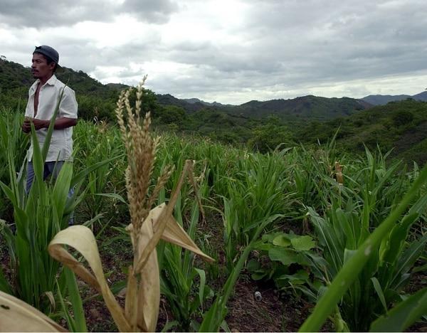 agricultura, cosechas, cultivos