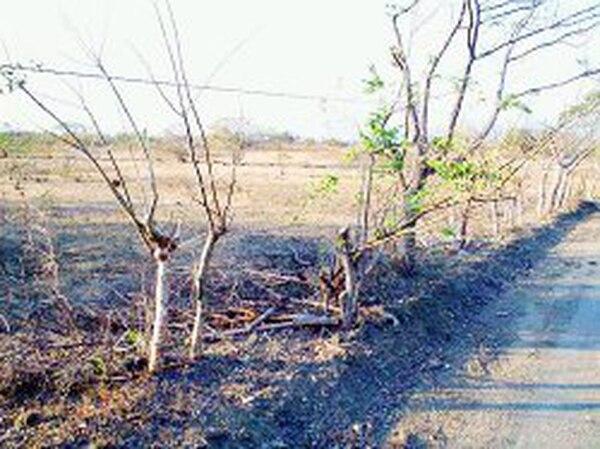 Este terreno en Las Mesas de Orotina, en Alajuela, a 4 kilómetros de puerto Caldera, reúne condiciones para un nuevo aeropuerto. Si se escoge esta finca, las obras empezarían apenas en el 2020. En verde. | JORGE UMAñA / PARA LA NACIÓN
