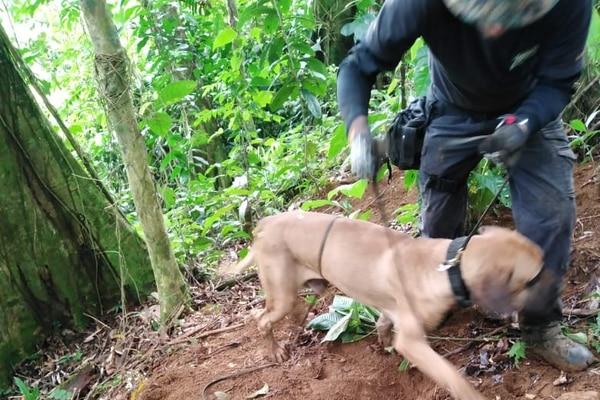 Un perro adiestrado en la búsqueda de restos humanos ayudó a la Policía a encontrar huesos dispersos en varios puntos de una zona montañosa. Foto: Reiner Montero.