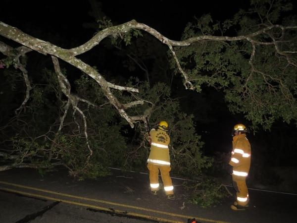 Bomberos trabajan removiendo un árbol que cayó en la Fila de Mora debido a los vientos